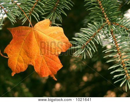 Autumn Pair
