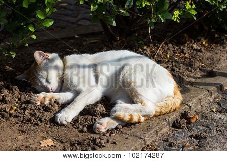 Stray Cat Sleeping Outdoors