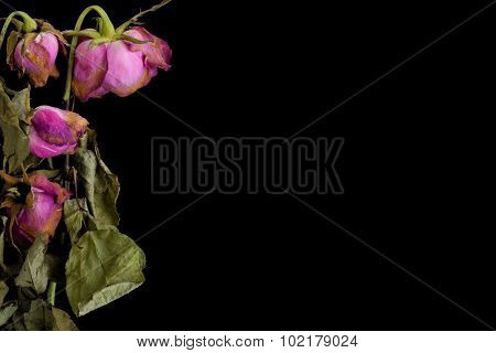 Wilted Flower Background / Wilted Flower / Wilted Flower On Black Background