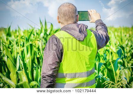 Farmer filmed with tablet PC on corn field