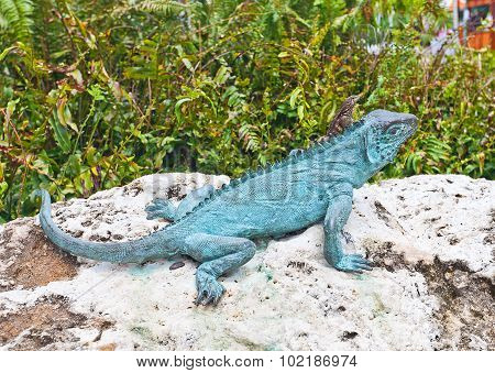 Lizard On Iguana Sculpture In George Town On Grand Cayman Island