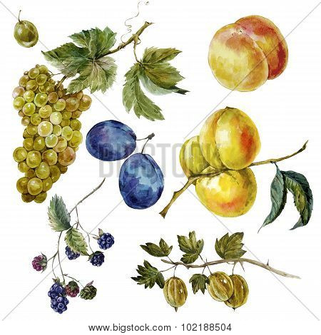 Set of vintage watercolor autumn harvest fruits