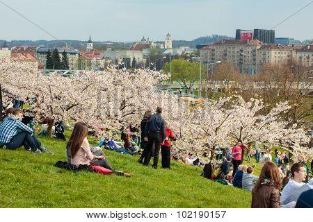 Chiune Sugihara Sakura Park In Vilnius
