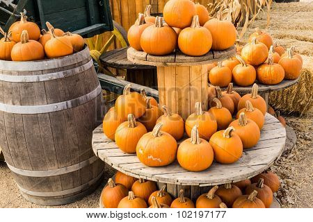 Harvest Pumpkins On Display