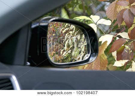 Autumn In A Car Window