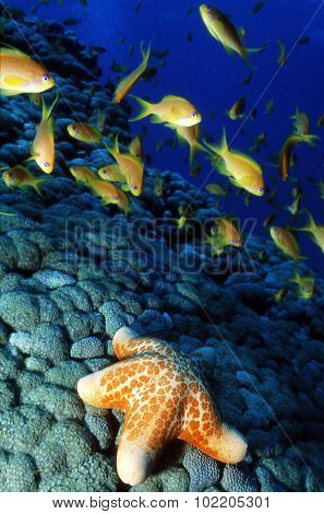 Wildlife Photos - Marine Life