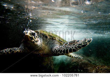 Wildlife Photos - Sea Turtle