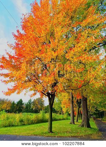 Bright Autumn Trees In A Park