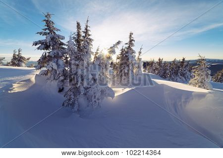 Winter landscape with trees covered with snow. Sunny morning
