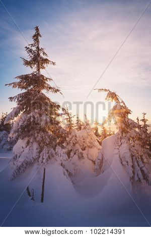 Morning sun in the mountain forest. Winter landscape with snow drifts