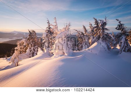 Fir trees under the snow. Winter landscape. Morning in the mountains