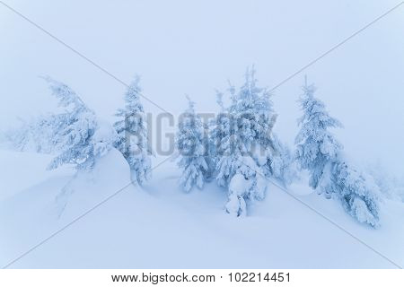Beautiful winter view of the mountain forest. Christmas landscape. Beauty in nature. Color toning
