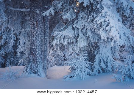 Christmas landscape in a fabulous winter forest