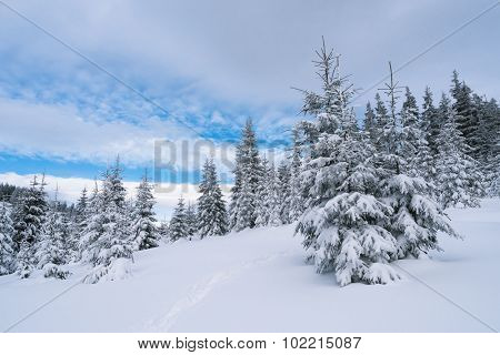 Winter landscape with path in the mountain forest. Cloudy day