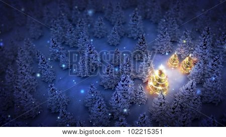 Lightened Christmas Trees In Pine Woods