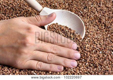 Hand With Buckwheat In Spoon