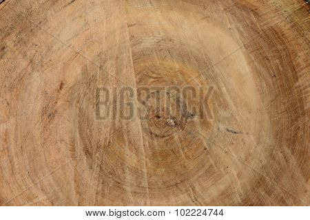 Background Texture Of A Linden Tree Wood