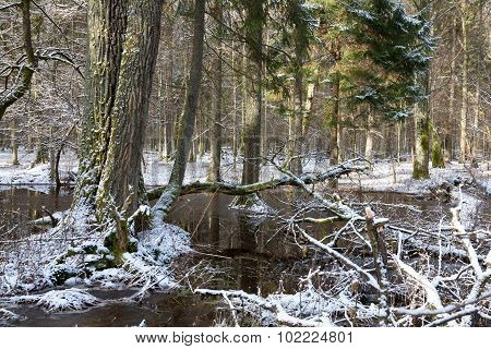 Wintertime Snowy Old Forest With Water