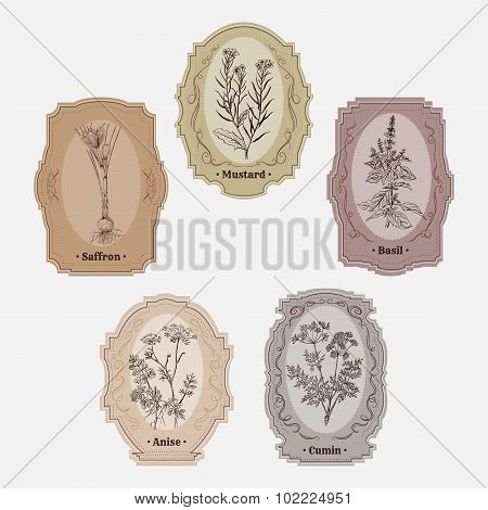 Collection of vintage storage labels with herbs and spices. mustard, basil, cumin, anise, saffron. R