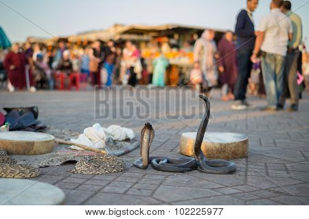 Marrakesh, Morocco, Africa - Domestic snakes in Jemaa el Fna square