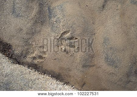 Trace Of Animal Track