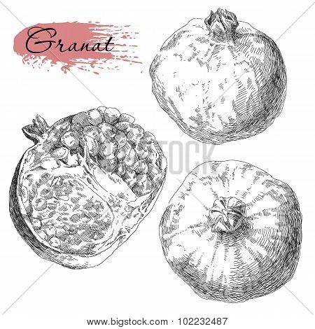 Set of hand drawn pomegranates