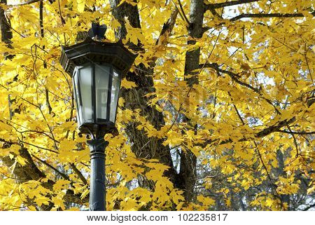 Lantern Against Background Of Yellow Maple Leaves