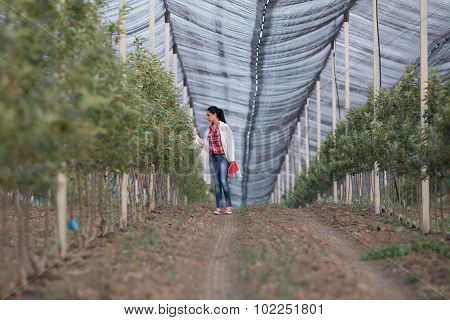 Agronomist In Orchard