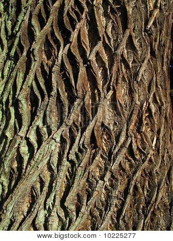 Background Natural Bark