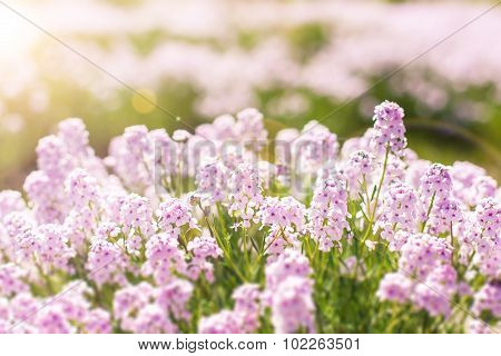 beautiful small violet flowers