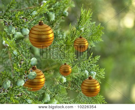 Christmas Tree Pine Tree Decorated With Gold Bauble Balls Decorations
