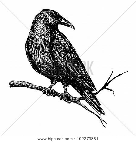 Vector Vintage Raven. Hand Drawn Illustration