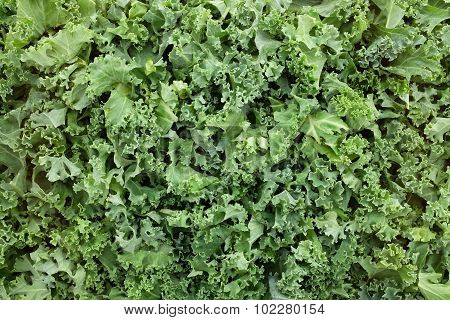 Shredded Kale Leaves Background