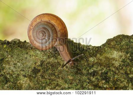 Snail Crawling On The Concrete