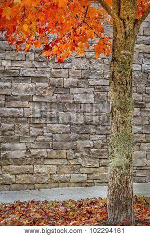 Autumn Tree With Brick Background