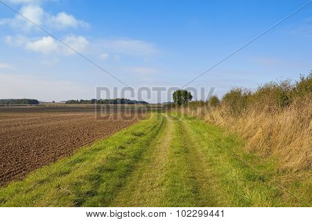 Grassy Country Bridleway