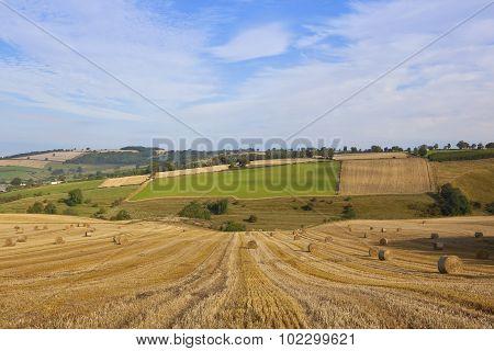 Harvest Landscape