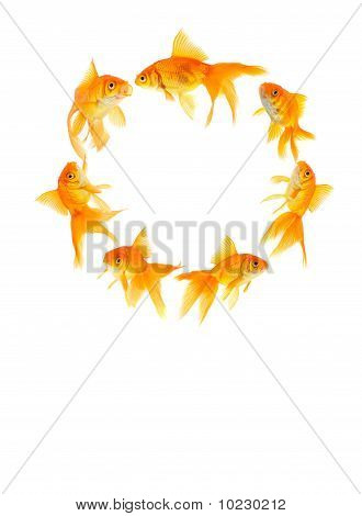 Three Goldfishes