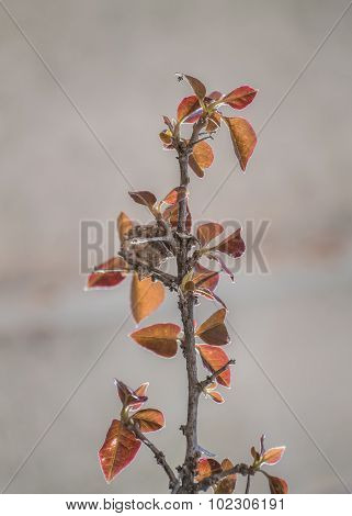 Isolated Plant With Against Blur Background