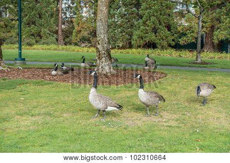 Gesse At Coulon Park