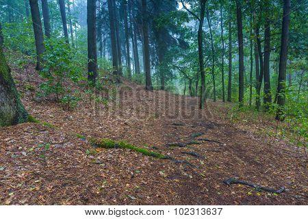 Beautiful Autumnal Forest Landscape