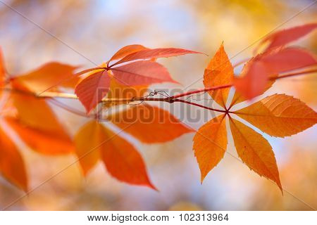 Autumn leaves background with bokeh lights - gentle colors of fall season, horizontal