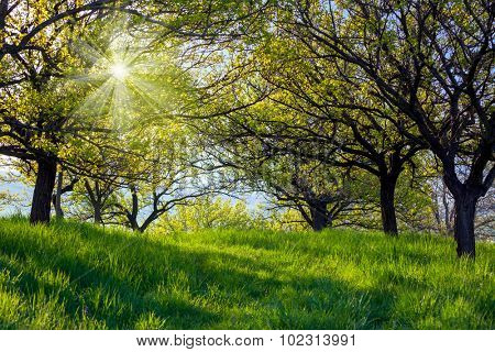 Picturesque spring garden background. Fresh leaves on trees and green grass with a bright shining sun.