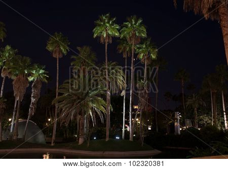 Palm Trees Lit With Lights