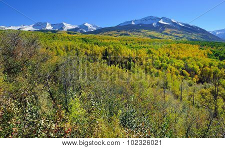 Alpine Scenery Of Yellow And Green Aspen And Snow Covered Mountains During Foliage Season