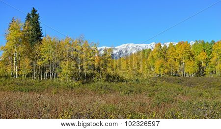 Panoramic Alpine Scenery Of Yellow And Green Aspen And Snow Covered Mountains During Foliage Season