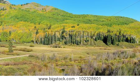 Yellow And Green Aspen And Hills During Foliage Season