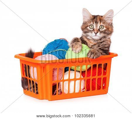 Kitten with balls of threads isolated on white background
