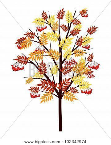 Autumn Rowan Tree
