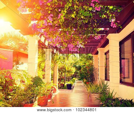 Beautiful vintage landscaped terrace of a house with flowers. Interior of cozy veranda with beautiful plants. Vintage style. Garden. Beauty hotel Courtyard in Mexico over sunset. Vacation